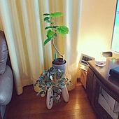リビング/観葉植物/ニトリ/フェイクグリーン/IKEA...などのインテリア実例 - 2021-03-06 18:17:48