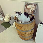 コーヒー樽/樽リメイク/猫ベッドDIY/一人暮らし/猫と暮らす...などのインテリア実例 - 2021-06-22 20:25:24