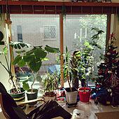 ひなたぼっこ/植物のある暮らし/子供と暮らす。/こどもと暮らす。/植物...などのインテリア実例 - 2017-11-25 23:24:02