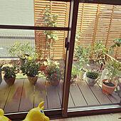 狭い庭/観葉植物/玄関/入り口のインテリア実例 - 2021-07-23 20:28:39