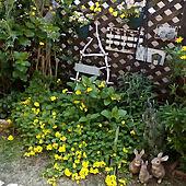 玄関/入り口/花のある暮らし/NO GREEN NO LIFE/ガーデニング/ガーデン...などのインテリア実例 - 2020-04-04 12:57:18