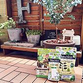 玄関/入り口/観葉植物/多肉植物/コバエ対策/植物のある暮らし...などのインテリア実例 - 2021-05-14 13:32:28
