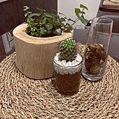 観葉植物/ACTUS/ドライフラワー のある暮らし/IKEA/花瓶...などのインテリア実例 - 2021-09-22 20:24:59