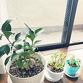 部屋全体/一人暮らし/ウォーターサーバーのある暮らし/観葉植物/シンプルインテリアのインテリア実例 - 2020-10-30 10:37:31