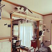 猫グッズいっぱい/和室/キャットステップ/キャットウォーク/ペットと暮らすインテリア...などのインテリア実例 - 2021-05-29 14:17:18