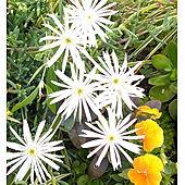 部屋全体/花のある暮らし/RCの出会いに感謝♡/グリーンのある暮らし/小さいけれど大好きなお庭...などのインテリア実例 - 2021-05-07 06:01:48