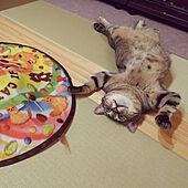 リビング/ねこと暮らす/猫のいる部屋/DAIKEN/和紙畳...などのインテリア実例 - 2021-08-05 19:46:55