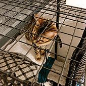 ペットと暮らすインテリア/猫とインテリア/グレーインテリア/自作ケージ/モノトーン...などのインテリア実例 - 2021-05-09 22:58:48