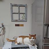 壁/天井/ねこと暮らす/猫スペース/ねこが好き/賃貸インテリア...などのインテリア実例 - 2021-07-29 20:40:53