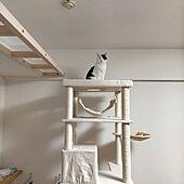 RoomClipアンケート/キャットタワー/据え置き型キャットタワー/猫のいる暮らし/キャットウォーク...などのインテリア実例 - 2021-01-13 23:25:04