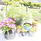 玄関/入り口/手作り花壇/おうち時間を楽しむ/南欧風/庭...などのインテリア実例 - 2021-05-16 08:17:17
