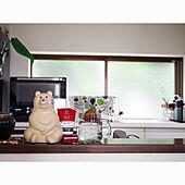 くまの貯金箱/くま/観葉植物/キッチンカウンター/キッチン雑貨...などのインテリア実例 - 2020-07-28 14:22:16