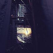 カーテン/ニトリ/アートパネル/目隠しフェンス/壁/天井のインテリア実例 - 2021-09-22 21:21:48