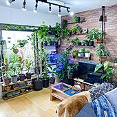 ウッドテイスト/ダクトレール/観葉植物/観葉植物のある部屋/観葉植物のある暮らし...などのインテリア実例 - 2020-07-09 10:36:48
