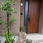 玄関/入り口/シンボルツリー/ジュンベリー/グリーンのある暮らし/花のある暮らし...などのインテリア実例 - 2021-06-13 12:54:26