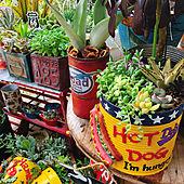 赤大好き❤/多肉植物/ベランダガーデン/寄せ植え/ベランダ...などのインテリア実例 - 2021-06-22 07:21:13
