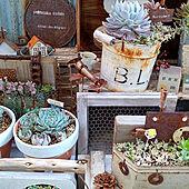 多肉植物の寄せ植え/ほっこり*/植物のある暮らし/古道具のある暮らし/幸せな気持ち♥...などのインテリア実例 - 2021-04-23 05:43:51