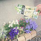 玄関/入り口/観葉植物/植物のある暮らし/虫対策/BotaNice...などのインテリア実例 - 2021-06-12 11:07:58