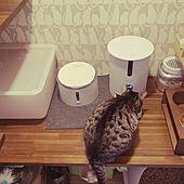 ねこのいる暮らし/猫とインテリア/猫と暮らす/猫ちゃん専用/自動給水器...などのインテリア実例 - 2021-05-08 11:36:08