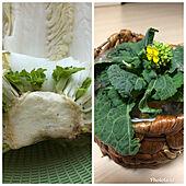 ゴミを減らす/観葉植物/キッチンのインテリア実例 - 2021-09-25 15:23:27
