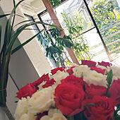 棚/観葉植物/植物/植物のある暮らし/出窓...などのインテリア実例 - 2020-03-18 11:25:44