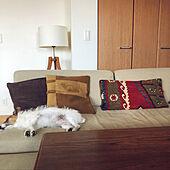ソファーベッド/キリムクッション/北欧/犬と暮らす/ゆったりと過ごす...などのインテリア実例 - 2021-06-16 11:57:25