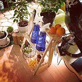 雑貨/猫のいる暮らし/観葉植物/猫トイレ/100円ショップ...などのインテリア実例 - 2021-02-25 23:04:48