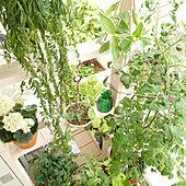 棚/ナチュラルインテリア/植物のある暮らし/植物と暮らす/テラスガーデン...などのインテリア実例 - 2021-06-20 13:55:53