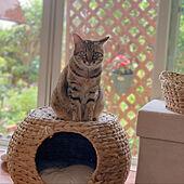 猫のいる暮らし/猫家具/猫ちぐら/ねこちぐら/ナチュラル素材...などのインテリア実例 - 2021-07-25 12:01:32