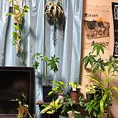 観葉植物/部屋全体のインテリア実例 - 2020-04-06 01:24:53