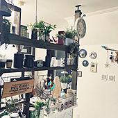 キッチン/壁紙本舗/植物のある暮らし/漆喰壁/セリアアイアンバー...などのインテリア実例 - 2021-03-08 11:57:27
