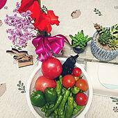 キッチン/楽しい時間/畑のお花/畑の野菜達/100均...などのインテリア実例 - 2021-07-12 16:03:58