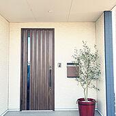 シンボルツリー/玄関ポーチ/鉢植え/オリーブの木/玄関のインテリア実例 - 2021-03-06 10:59:13
