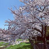 桜/注文住宅/花のある暮らし/小さな家/好きな物に囲まれた暮らし...などのインテリア実例 - 2021-03-26 12:00:54