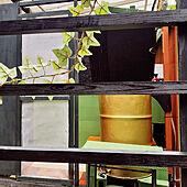 バス/トイレ/二世帯住宅/グリーンのある暮らし/半地下のあるお家/DIY...などのインテリア実例 - 2021-03-07 14:44:03
