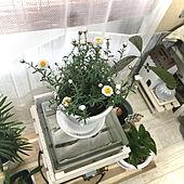 皆さんのいいね、嬉しいです!/chinonちゃんのガーデンピック♡/アボカド種から育てました/ガラスブロック/花かんざし...などのインテリア実例 - 2021-03-07 14:38:22
