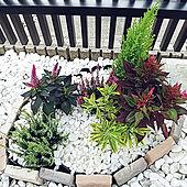 玄関/入り口/台風対策。。。/小さな庭ฅ( ͒ᵕ̳◡ᵕ̳ ͒)。o○/花壇 手作り/シンプルな暮らし...などのインテリア実例 - 2021-09-18 07:11:19