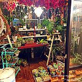 サンルーム/趣味部屋/サボテン/多肉植物寄せ植え/着生植物...などのインテリア実例 - 2021-09-17 20:44:49