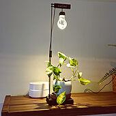 机/植物育成ランプのインテリア実例 - 2020-07-02 18:51:02