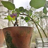 日常/種まき/春だよ♪/お庭のある暮らし/リラックス...などのインテリア実例 - 2021-03-08 22:05:58