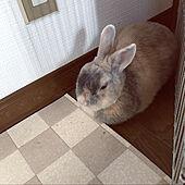ウサギと暮らす/ニトリ/部屋全体のインテリア実例 - 2021-09-25 10:36:45