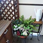 玄関/入り口/フェイクグリーン/ダイソーのインテリア実例 - 2020-04-07 10:03:29
