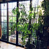 海外インテリアに憧れる/窓/掃き出し窓/掃き出し窓窓枠DIY/マステでイメチェン...などのインテリア実例 - 2020-07-02 17:34:44