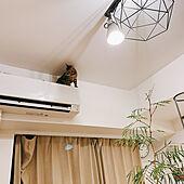 一人暮らし/1K/猫と植物の共存/都会のジャングル/猫対策...などのインテリア実例 - 2021-02-25 22:04:37