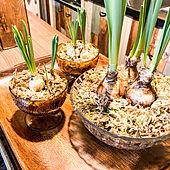 カフェ風/モロッカン/多肉植物/100均/観葉植物...などのインテリア実例 - 2021-01-25 19:16:44