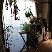 部屋全体/観葉植物/和室/リビングボード/植物のある暮らし...などのインテリア実例 - 2021-01-23 03:53:50