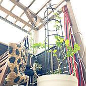 ガーデニング初心者/茉莉花/羽衣ジャスミン/IKEA/木が好き...などのインテリア実例 - 2020-10-01 10:37:44