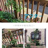 玄関/入り口/ばら/バラ/薔薇/ビフォーアフター...などのインテリア実例 - 2021-04-08 10:19:25
