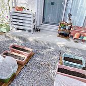 家庭菜園/庭/防虫ネット/プランター/プランター菜園...などのインテリア実例 - 2021-09-19 16:03:47