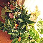 リビング/ひなたぼっこ/観葉植物のある部屋/観葉植物のある暮らし/観葉植物のインテリア実例 - 2020-10-27 08:44:53
